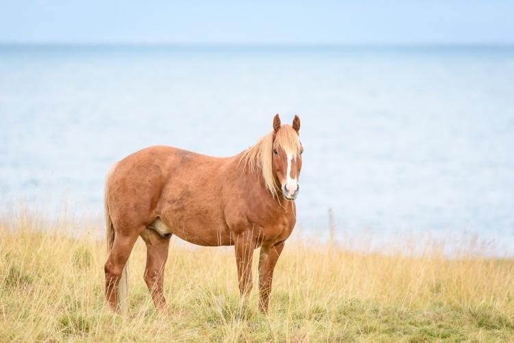 horses-in-field-i-1-of-1