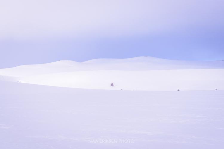 Finnmark Norway Arctic Tundra