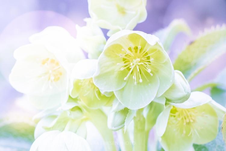 Green purple white flower